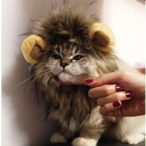 Lion-Mane-Wig-Cat-Costume-and-Small-Dog-Costume-with-Complimentary-Feathered-Catnip-Toy-Brown-Headwear-Hat-with-Ears-for-Halloween-Christmas-0-0